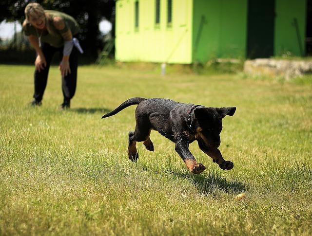 vesele naladěný pes se svým majitelem